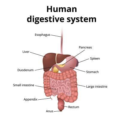 Question Bank Digestive System - Testlabz