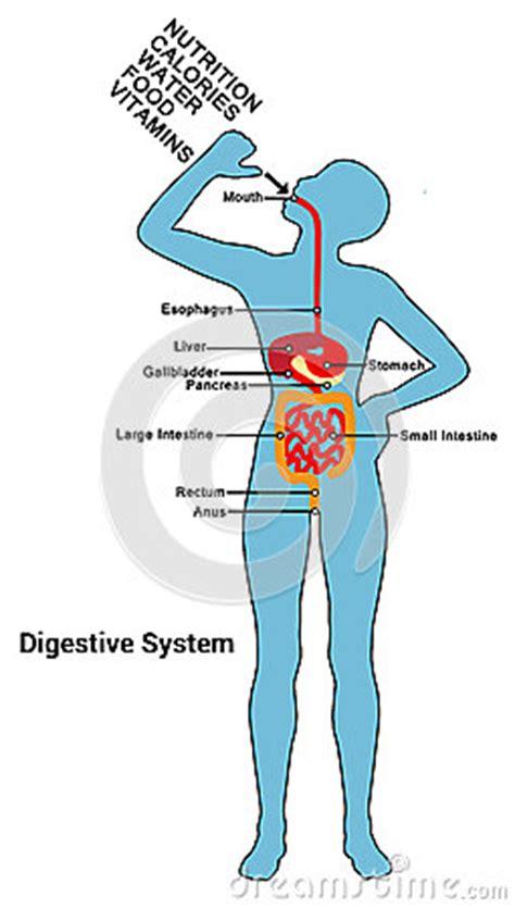 Digestive system disease Essay Example Graduateway